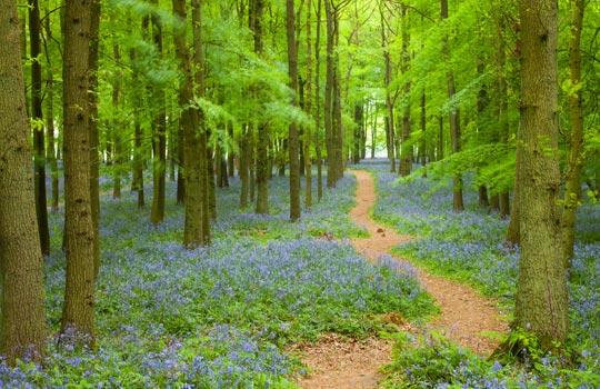 path_inthe_woods.jpg - 67091 Bytes
